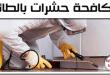 أفضل شركة مكافحة حشرات بالطائف 0544401211