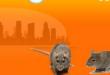 شركة مكافحة حشرات بالقصيم 0544401211